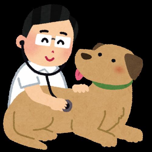 犬の血尿の原因や病気の症状と予防方法まとめ